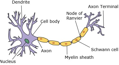 人工神經網絡